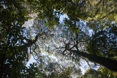 树在澳大利亚国家公园 免版税库存照片