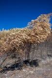 树在烧伤森林里 库存照片