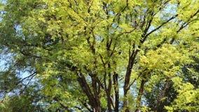 树在热带雨林里 影视素材