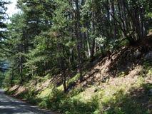树在狂放的森林克里米亚里 免版税库存图片