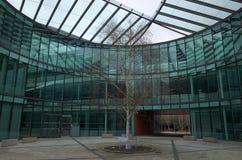 树在现代玻璃办公楼庭院地区  库存图片