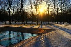 树在现代区域的玻璃反射了在公园 免版税库存照片