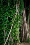 树在瓜拉江沙县马来西亚 免版税库存图片
