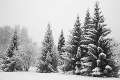 树在用新鲜的雪盖的公园 免版税库存图片