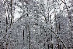 树在用蓬松雪包括的冬天 库存照片
