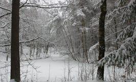 树在用雪包括的冬天 库存图片
