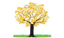 树在白色背景留下金子 免版税图库摄影