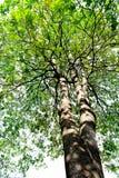 树在白色背景的纹理表面 库存图片