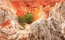 树在神仙的小河峡谷Suoi连队的敌对环境里增长,面对通过竹子包缠它的方式的一点河 图库摄影