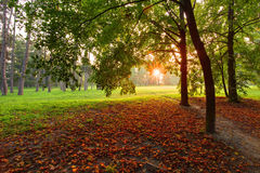 树在秋天公园 图库摄影