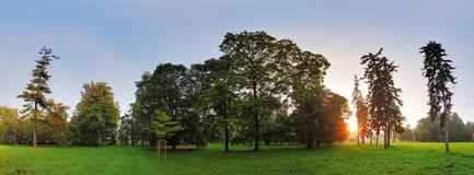 树在秋天公园 免版税图库摄影