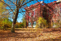 树在秋天前的那个房子 免版税图库摄影