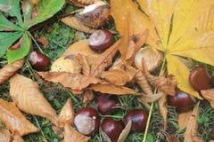 树在秋天在卢森堡市 免版税图库摄影