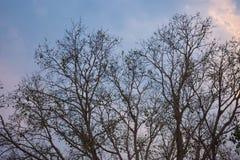 树在秋天晚上 免版税库存图片