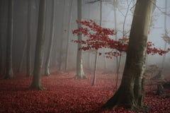 树在秋天期间的神秘的森林 库存照片