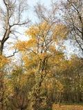 树在秋天森林里 库存图片