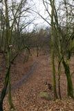 树在秋天森林里 免版税库存照片