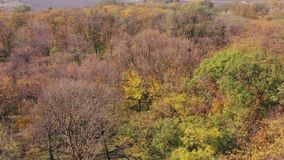 树在秋天的一个公园 晴朗的日 股票录像