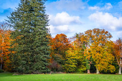 树在秋天的改变肤色 免版税库存照片