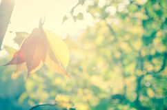 树在秋天阳光下 库存图片