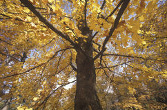 树在秋天,田纳西 库存照片