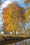 树在秋天 免版税库存图片