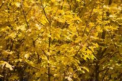 树在秋天 库存照片