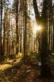 树在秋季森林里 库存照片