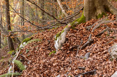树在秋季森林里 免版税库存照片