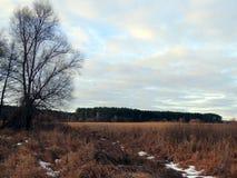 树在积雪的道路附近的草甸 免版税库存照片