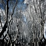 树在罗马Gianicolo 免版税库存照片
