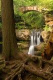 树在老人的洞, Hocking小山国家公园,俄亥俄的上部秋天前面根源 免版税图库摄影