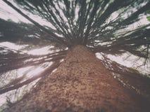 树在舍布鲁克森林里 免版税库存图片