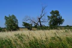 树在草甸 免版税库存图片