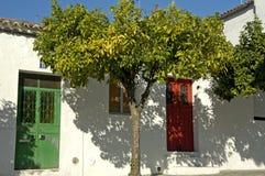 树在葡萄牙 库存图片