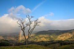 树在蒙泰韦尔德哥斯达黎加 图库摄影