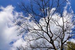 树在蓝天下 库存照片
