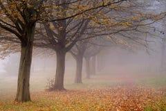 树在薄雾的被排行的道路 免版税库存照片