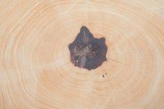 树在被切开以后的圆周树干纹理的关闭  免版税库存图片