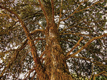 树在西班牙 免版税图库摄影