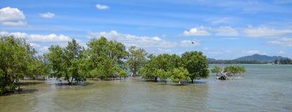 树在酸值朗塔,泰国海岛上的水中  免版税库存照片
