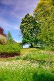 树在里氏古堡附近的开花公园在肯特 免版税库存图片