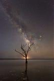 树在银河星系下的海洋 库存照片