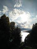 树在阳光下 库存图片