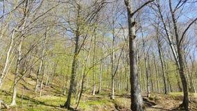 树在阳光,开始下春天在森林里 库存图片
