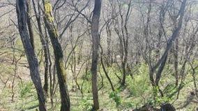 树在阳光,开始下春天在森林里 库存照片