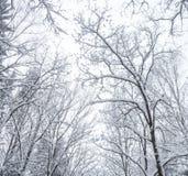 树在降雪以后的公园 库存图片
