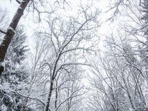 树在降雪以后的公园 库存照片