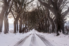 树在雪盖的被排行的路 免版税库存照片