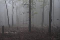 树在雾的一个森林里 免版税库存照片